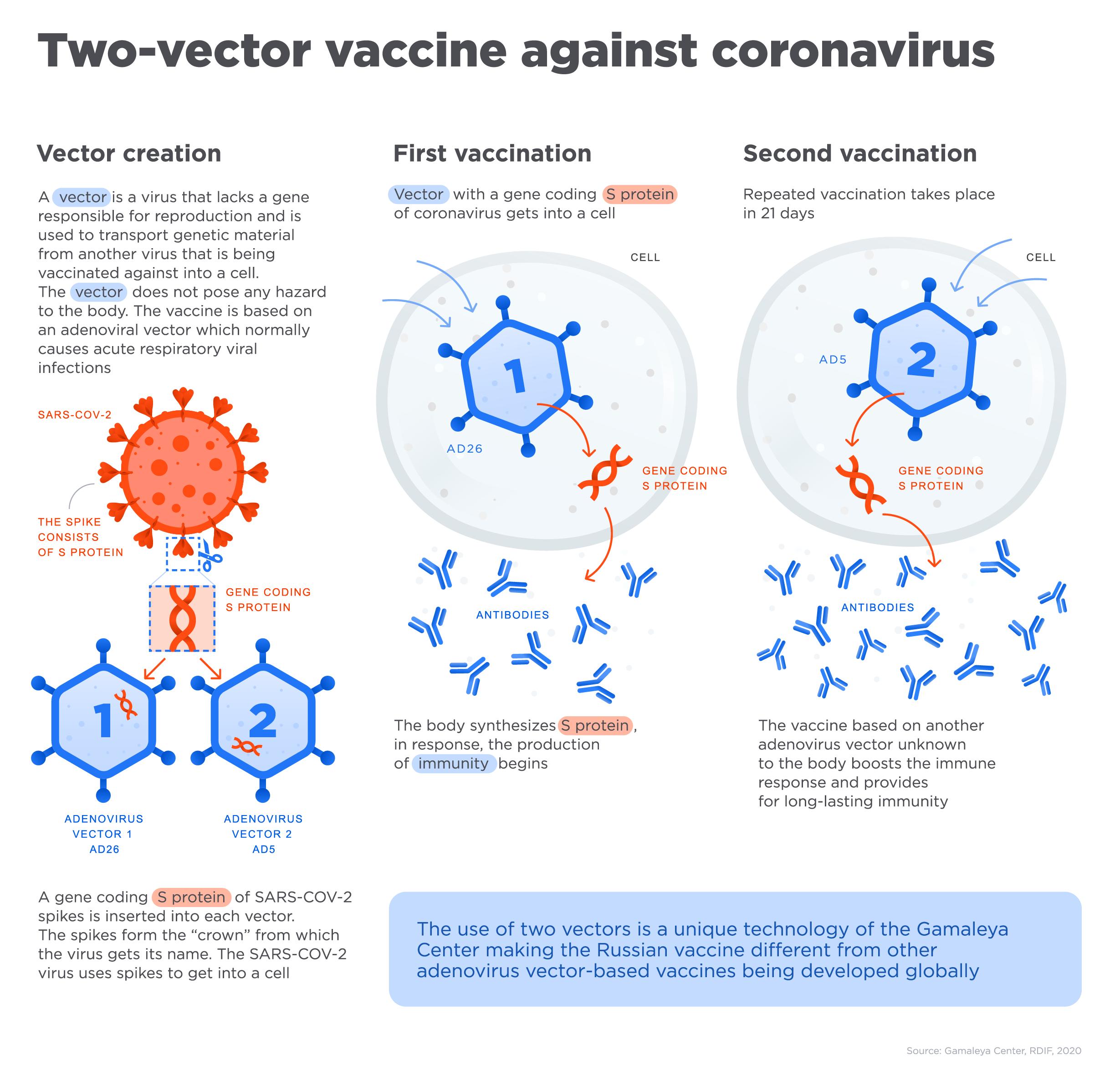 Two-vector vaccine agains coronavirus